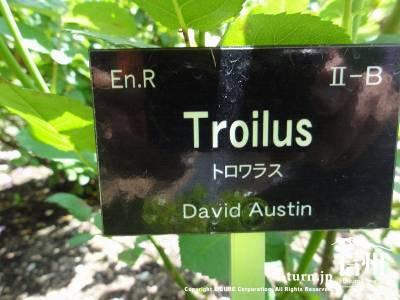 Troilus(トロワラス)