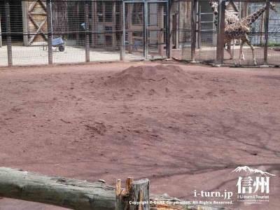 キリンの地面は赤い土