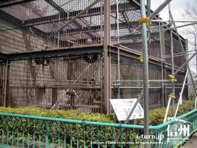 建設現場見たいなチンパンジーの前