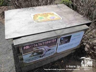 冬ヒキガエルが冬眠している箱