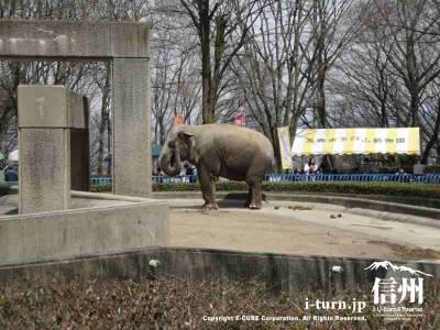 歩く茶臼山動物園の象