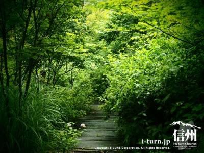 新緑のきれいなお庭