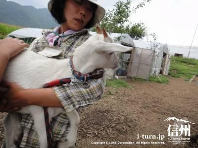 子ヤギを抱っこして連れてきてくれます