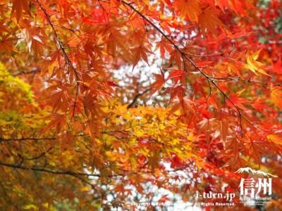 紅葉がきれい