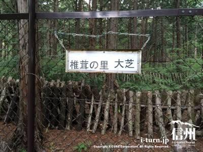 椎茸の里大芝の看板