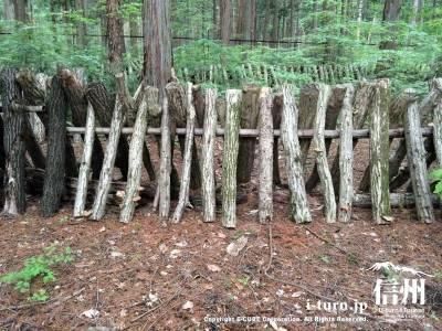 椎茸の原木がズラリ