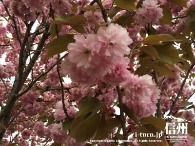 5月は花が咲いていてキレイ