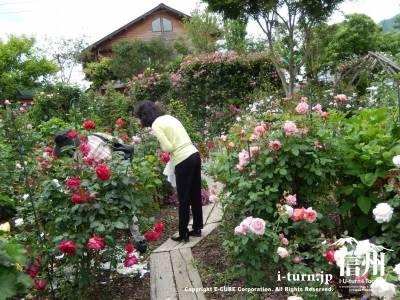 平日でしたがバラを楽しまれてる方が何人もいらっしゃいました