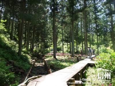森の中を散歩するように歩きます