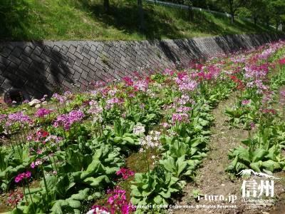 公園内には約5万株の花が植栽されているそうです