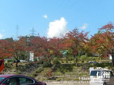 紅葉も始まっています
