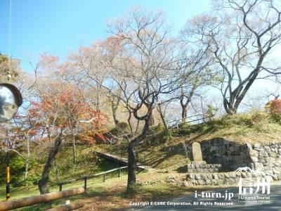 桜の木が見えてきました