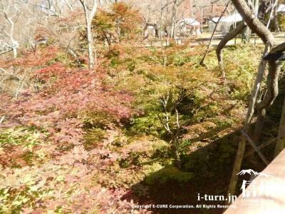 桜雲橋から見下ろすともみじが見えます