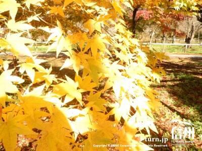 とても黄色が鮮やかで綺麗