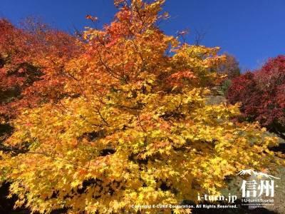 色々な種類の紅葉を楽しむことができます
