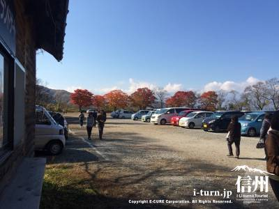 駐車場のもみじも色づいています