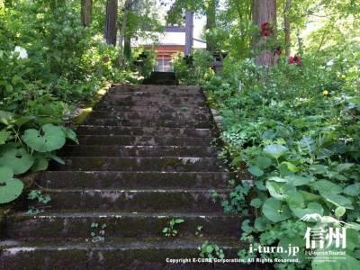 苔の生えた趣のある階段をのぼっていきます