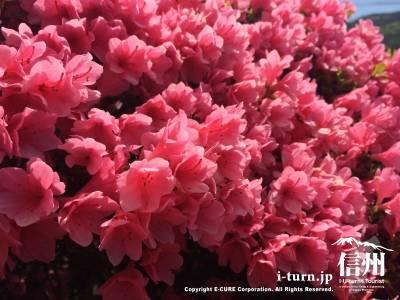 とても可愛らしいピンク