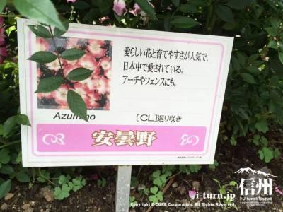 こんな感じでバラの種類や特徴が書かれた看板がついています