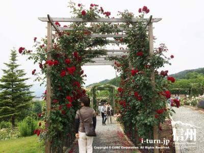 真っ赤なバラのアーチ