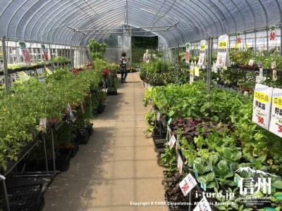2つ目のハウスは野菜中心