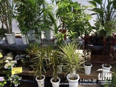 観葉植物も置いてありました