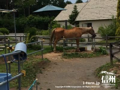 このお馬さん異様に足が長い