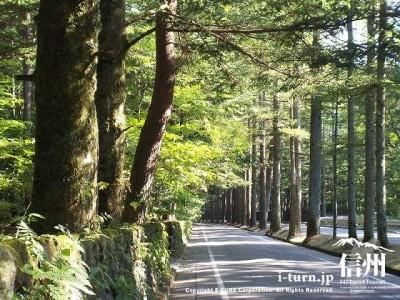 三笠通りの落葉松並木|新日本街路樹百景の通りは絶景|軽井沢町軽井沢