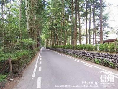 万平通り|真っ直ぐ続く大樹の通りで森林浴|軽井沢町軽井沢
