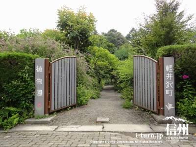 軽井沢町植物園|四季を通じて様々な山野草が観られる|軽井沢町発地