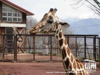 茶臼山動物園【2】|アフリカ平原の動物たちを観察|長野市篠ノ井