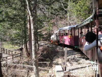 赤沢森林鉄道|トロッコ電車の出発から終点駅まで|木曽郡上松町