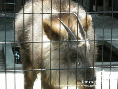 大町山岳博物館(4)|付属園の動物たち|大町市