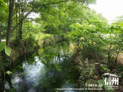 せせらぎの小径|「おひさま」ロケ地にもなった犀川堤防の脇を流れる川|安曇野市明科