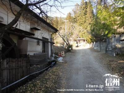 正福寺|安産や子育てを見守る「子宝杉」|安曇野市穂高
