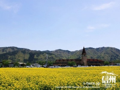 スイス村の菜の花|水鏡にうつる菜の花とスイス村|安曇野市豊科
