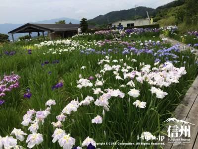 南信州四季彩の丘スイートガーデン|見頃の花菖蒲と喫茶|飯田市山本