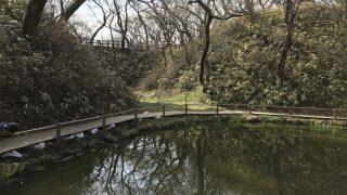 高遠城の堀にある池|桜咲く前の真っ昼間のあの池|伊那市高遠